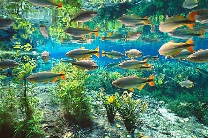 Peixes - Aquário Natural em Bonito MS
