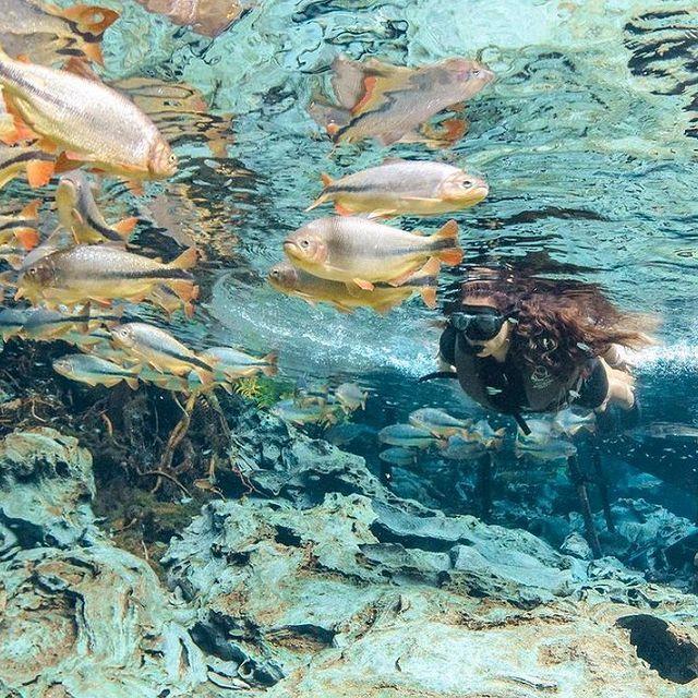 Aquario Natural